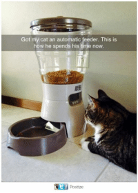 Memes, Time, and 🤖: Got my cat an automatic feeder. This is  how he spends his time now.  AS  Ef  Postize