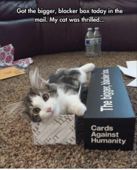 card against humanity: Got the bigger, blacker box today in the  mail. My cat was thrilled.  Cards  Against  Humanity