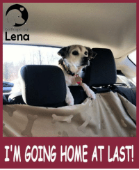GotBeagles org  Lena  I'M GOING HOME ATLAST <3  LENA IS AVAILABLE FOR ADOPTION!  We are featuring LENA, a current MW BREW beagle looking for her furever home. Please click on the link to read her bio and / or to request more information. http://bit.ly/2eduqyn