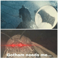 Memes, Gotham, and 🤖: Gotham needs me... Join our group 8Shit Memes
