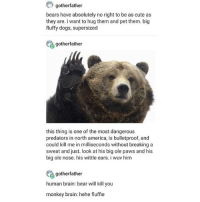 so cute uwu - Max textpost textposts: gotherfather  bears have absolutely no right to be as cute as  they are. i want to hug them and pet them. big  fluffy dogs, supersized  gotherfather  this thing is one of the most dangerous  predators in north america, is bulletproof, and  could kill me in milliseconds without breaking a  sweat and just. look at his big ole paws and his  big ole nose. his wittle ears. i wuv him  gotherfather  human brain: bear will kill you  monkey brain: hehe fluffie so cute uwu - Max textpost textposts