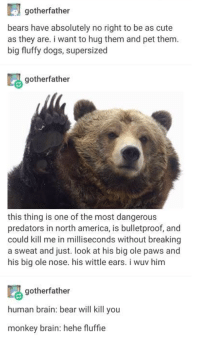 Deadly floofy puppers: gotherfather  bears have absolutely no right to be as cute  as they are. i want to hug them and pet them  big fluffy dogs, supersized  gotherfather  this thing is one of the most dangerous  predators in north america, is bulletproof, and  could kill me in milliseconds without breaking  a sweat and just. look at his big ole paws and  his big ole nose. his wittle ears. i wuv him  gotherfather  human brain: bear will kill you  monkey brain: hehe fluffie Deadly floofy puppers