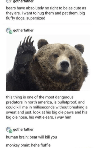 America, Cute, and Dogs: gotherfather  bears have absolutely no right to be as cute as  they are. i want to hug them and pet them. big  fluffy dogs, supersized  gotherfather  this thing is one of the most dangerous  predators in north america, is bulletproof, and  could kill me in milliseconds without breaking a  sweat and just. look at his big ole paws and his  big ole nose. his wittle ears. i wuv him  gotherfather  human brain: bear will kill you  monkey brain: hehe fluffie Which brain do you have?