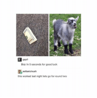why is there a baby goat.: gqa1  like In 5 seconds for good luck  seitanickush  this worked last night lets go for round two why is there a baby goat.