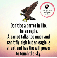 Life, Memes, and Too Much: Gr8 ppl Gr8  thoughts  Fib melGr8ppl  Don't be a parrot in life,  be an eagle  A parrot talks too much and  can't fly high but an eagle is  silent and has the will power  to touch the sky