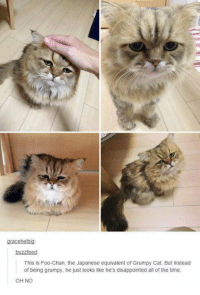 Cats, Disappointed, and Funny: gracehelbig:  buzzfeed  This is Foo Chan, the Japanese equivalent of Grumpy Cat. But instead  of being grumpy, he just looks like he's disappointed all of the time.  OH NO