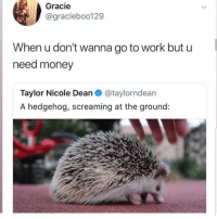 Latinos, Memes, and Money: Gracie  @graciebo0129  When u don't wanna go to work but u  need money  Taylor Nicole Dean@taylorndean  A hedgehog, screaming at the ground: Ughhh 😤😤😤😂😂 🔥 Follow Us 👉 @latinoswithattitude 🔥 latinosbelike latinasbelike latinoproblems mexicansbelike mexican mexicanproblems hispanicsbelike hispanic hispanicproblems latina latinas latino latinos hispanicsbelike