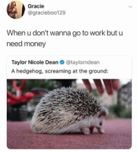 one of y'all sent this in 😂😂 this makes me laugh so hard lolol: Gracie  @gracieboo129  When u don't wanna go to work but u  need money  Taylor Nicole Dean @taylorndean  A hedgehog, screaming at the ground: one of y'all sent this in 😂😂 this makes me laugh so hard lolol