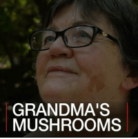 """Africa, Jail, and Memes: GRANDMA'S  MUSHROOMS 3 APR: Psilocybin mushrooms, also known as """"magic"""" mushrooms, are banned in many countries around the world due to their hallucinogenic qualities. But one 72-year-old-woman in South Africa is fighting through the courts to legalise their use for spiritual ceremonies. Monica Cromhout faces a possible jail sentence for dealing in illegal substances. Find out more: bbc.in-shrooms Mushrooms SouthAfrica MagicMushrooms Psilocybin Spirituality MonicaCromhout BBCShorts BBCNews @BBCNews"""