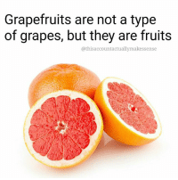 Good to know 🌽🌽🌽🌽 grapes grapefruit fruits food: Grapefruits are not a type  of grapes, but they are fruits  @this account actuallymakessense Good to know 🌽🌽🌽🌽 grapes grapefruit fruits food