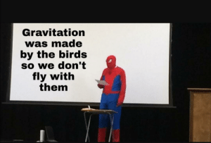 Birds, The Birds, and Gravitation: Gravitation  was made  by the birds  So we don't  fly with  them Goddamit Birds