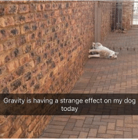 Funny, Memes, and Gravity: Gravity is having a strange effect on my dog  today @bonkers4memes posts nice memes on a daily basis