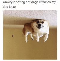 Dog Today: Gravity is having a strange effect on my  dog today