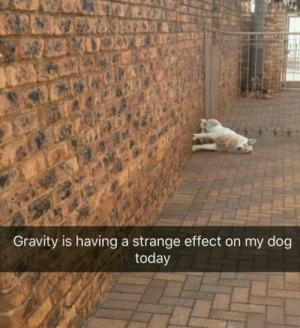 Gravity, Today, and Doggo: Gravity is having a strange effect on my dog  today Doggo is broken?