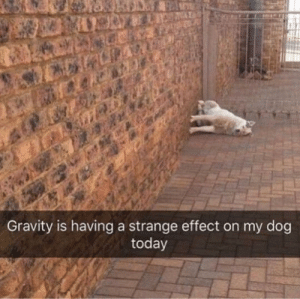 meirl: Gravity is having a strange effect on my dog  today meirl