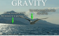Birds, Gravity, and Strong: GRAVITY  Yet weak enough that birds  can still fly.  Strong enough to hold  the oceans to a spinning ball,