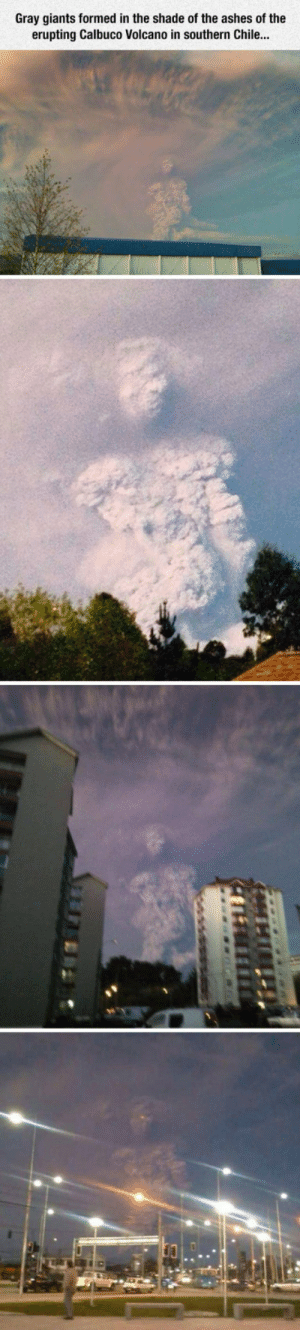 Club, Shade, and Tumblr: Gray giants formed in the shade of the ashes of the  erupting Calbuco Volcano in southern Chile... laughoutloud-club:  Smoke Giants