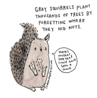 I've got some bad news about a forgetful animal. sadanimalfacts: GRAY SQUIRRELS PLANT  THOUSANDs TREES BY  FORGETTING WHERE  THEY HID NUTS  there's  another  tha  could h  I I I  been  a  Snack. I've got some bad news about a forgetful animal. sadanimalfacts