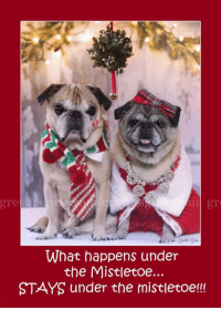 Memes, Calendar, and Pugs: gre  What happens under  the Mistletoe  STAYS under the mistletoe!!! :P :) <3 <3 <3 MWAH!!!!! <3 <3 <3   Check it out!!!!! 100% of ALL CALENDAR PROFITS are going to Seattle Pug Rescue TODAY and tomorrow. You will be helping to save SO MANY pugs in need and you'll get a whole year of sweet pug faces!!!  Together we can make a real difference!!!!! Click here to order your today www.grettasgirls.com