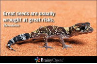Memes, 🤖, and Html: Great deeds are usually  wrought at great risks.  Herodotus  Brainy  Quote Great deeds are usually wrought at great risks. - Herodotus https://www.brainyquote.com/quotes/quotes/h/herodotus101480.html #brainyquote #QOTD #risk #deeds