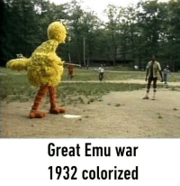War, Emu, and Great Emu War: Great Emu war  1932 colorized