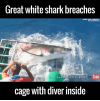 Dank, Shark, and Sharks: Great white shark breaches  GABE AND GARRETT/  VIA STORY FUL  Gate and Garrett 2016 You  cage with diver inside This is about as terrifying as it gets! 😳😱