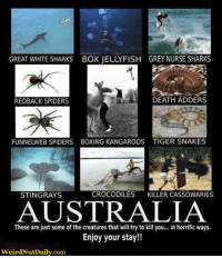 ;) ~Storm: GREAT WHITE SHARKS BOX JELLYFISH GREY NURSE SHARKS  DEATH ADDERS  REDBACK SPIDERS  FUNNELWEB SPIDERS BOXING KANGAROOS TIGER SNAKES  CROCODILES  KILLER CASSOWARIES  STINGRAYS  AUSTRALIA  These are just some of the creatures that will try to kill you  in horrific ways.  Enjoy your stay!!  WeirdNutDaily.com. ;) ~Storm