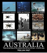 Boxing, Memes, and Australia: GREAT WHITE SHARKS BOX JELLYFISH GREY NURSE SHARKS  DEATH ADDERS  REDBACK SPIDERS  FUNNELWEB SPIDERS BOXING KANGAROOS TIGER SNAKES  CROCODILES  KILLER CASSOWARIES  STINGRAYS  AUSTRALIA  These are just some of the creatures that will try to kill you... in horrific ways.  Enjoy your stay!! Nope.