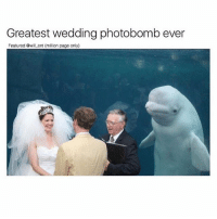Memes, Photobomb, and Wedding: Greatest wedding photobomb ever  Featured @will ent (million page only) 😂