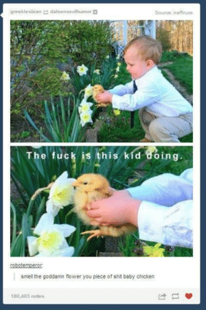 Shit, Smell, and Chicken: greeklesbian datsenseofhumor  Source: iraffiruse  The fuck is this kid uoing.  smell the goddamn flower you piece of shit baby chicken  180,403 notes You piece of shit baby chicken