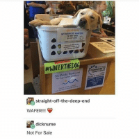 Memes, Dick, and Good: GREETINGS  MY NAME IS WAFER!  rMNOT SICK  COMMUNIT  No Public Restroom  RATON  No hay  straight-off-the-deep-end  WAFER!!!  dick nurse  Not For Sale VERY GOOD - Max textpost textposts