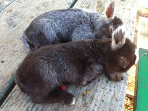Greetings, stranger. Might I interest you in some baby donkeys?: Greetings, stranger. Might I interest you in some baby donkeys?