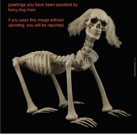 greetings you have been spooked by  bony dog man  if you pass this image without  upvoting, you will be reported Just a reminder that Hillary Clinton wants this picture of her removed from the internet.