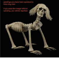 So spooky... don't look at it for too long.: greetings you have been spooked by  bony dog man  if you pass this image without  upvoting, you will be reported. So spooky... don't look at it for too long.