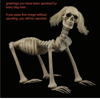 "greetings you have been spooked by  bony dog man.  if you pass this image without  upvoting, you will be reported. TIFU by getting my PhD. By the way did I mention I got my PhD. I am now a doctor or meme studies. So you can call Dr. Meme (it's pronounced ""meme"")."