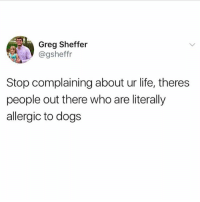 Dogs, Life, and Memes: Greg Sheffer  @gsheffr  Stop complaining about ur life, theres  people out there who are literally  allergic to dogs If this doesn't put your life into perspective I don't know what will. Count your blessings people!!