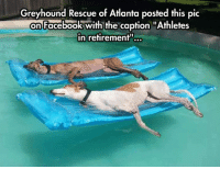 """Dogs, Facebook, and Life: Greyhound Rescue of Atlanta posted this pic  on Facebook with the caption """"Athletes  in retirement""""... <p>Senior Dogs Enjoying Life.</p>"""