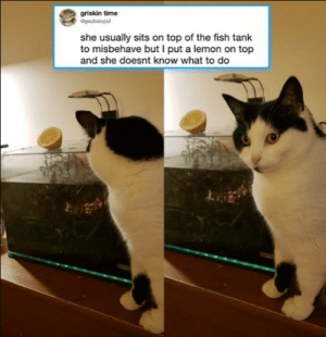 Fish, Time, and MeIRL: griskin time  @gaybabyjail  she usually sits on top of the fish tank  to misbehave but I put a lemon on top  and she doesnt know what to do meirl