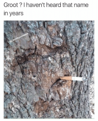 Memes, 🤖, and Name: Groot haven't heard that name  in years Groot is looking pretty terrible nowadays.