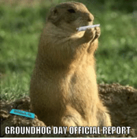 ~lsf: GROUNDHOG DAY OFFICIAL REPORT ~lsf