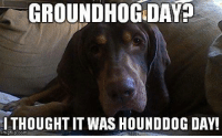 That too, honey :-): GROUNDHOG DAY?  THOUGHT IT WAS HOUNDDOG DAY!  img flip  com That too, honey :-)