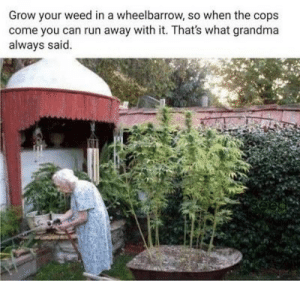 Wise words grandma: Grow your weed in a wheelbarrow, so when the cops  come you can run away with it. That's what grandma  always said Wise words grandma