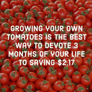 But you know what you eat: GROWING YOUR OWN  TOMATOES IS THE BEST  WAY TO DEVOTE 3  MONTHS OF YOUR LIFE  TO SAVING $2.17 But you know what you eat
