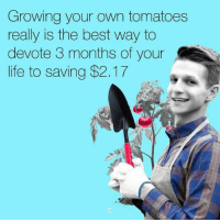 Life, Memes, and Best: Growing your own tomatoes  really is the best way to  devote 3 months of your  life to saving $2.17