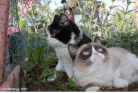 Animals, Love, and Memes: Grumpy Cat  2013 Pokey & Tardar Sauce!:D if you love animals and love to laugh, then join Animal Memes.