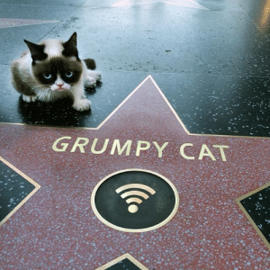 dropthetenors:  bloodybookworm:  A CAT A FREAKING CAT GETS A STAR ON THE HOLLYWOOD WALK OF FAME AND I'M SITTING HERE WORKING MY BUTT OFF TRYING TO GET THROUGH COLLEGE AND MAKE A STANDARD LIVING AND THIS CAT MAKES A FROWNY FACE AT A CAMERA AND GETS A FRICKING HOLLYWOOD STAR NOPE NO I DID NOT SIGN UP FOR THAT  Not ony did he get a star, he GOT FREAKING WIFI!!! : GRUMPY CAT dropthetenors:  bloodybookworm:  A CAT A FREAKING CAT GETS A STAR ON THE HOLLYWOOD WALK OF FAME AND I'M SITTING HERE WORKING MY BUTT OFF TRYING TO GET THROUGH COLLEGE AND MAKE A STANDARD LIVING AND THIS CAT MAKES A FROWNY FACE AT A CAMERA AND GETS A FRICKING HOLLYWOOD STAR NOPE NO I DID NOT SIGN UP FOR THAT  Not ony did he get a star, he GOT FREAKING WIFI!!!