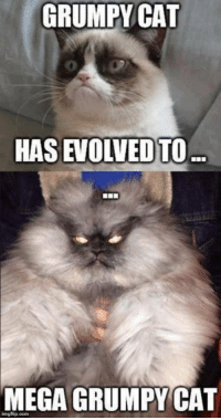 Dank, Grumpy Cat, and Evolve: GRUMPY CAT  HAS EVOLVED)TO  MEGA GRUMPYCAT