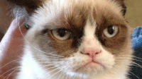 Grumpy Cat. is going from memes to MOVIES! Yup, you'll be seeing this furry-fad on the big screen soon. Click the link below and read! The memes are definitely funny, but do you think the movie will be? - Mike Adam