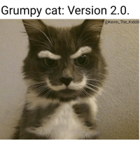 Memes, Grumpy Cat, and Kidd: Grumpy cat: Version 2.0  @Kevin The Kidd Awe Kitty kitter Ha ha. I'm weak flatlined dead pettypost nochill teamnoharmdone noharmdone