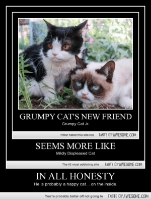 In All Honestyhttp://omg-humor.tumblr.com: GRUMPY CAT'S NEW FRIEND  Grumpy Cat Jr.  TASTE OF AWESOME.COM  Hitler hated this site too  SEEMS MORE LIKE  Mildly Displeased Cat  TASTE OF AWESOME.COM  The #2 most addicting site  IN ALL HONESTY  He is probably a happy cat... on the inside.  TASTE OFAWESOME.COM  You're probably better off not going to In All Honestyhttp://omg-humor.tumblr.com